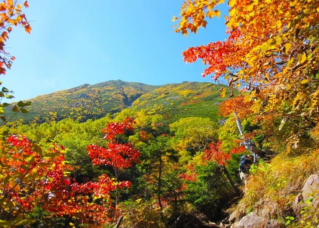 季節を感じる10月は霜降