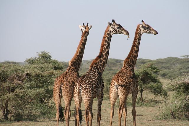 身長高い我が家の3兄弟!
