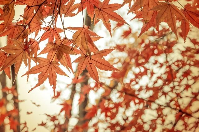 霜降といえば秋から冬へ!落葉が美しい!
