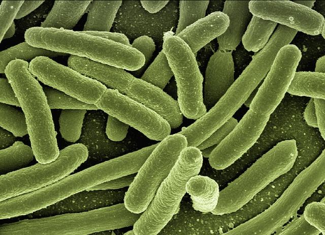 井戸水の雑菌・細菌・ピロリ菌のリスク
