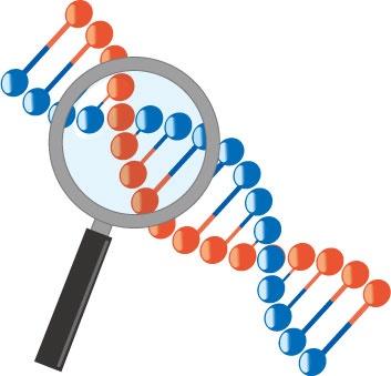 遺伝子検査内容とは?
